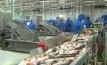 Hợp tác sản xuất cá tra bền vững