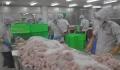 Gò Đàng có 3 nhà máy chế biến cá tra được xuất khẩu vào Mỹ