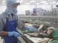 Quí 1-2017, Trung Quốc trở thành thị trường xuất khẩu lớn nhất cá tra Việt Nam