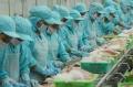 Xuất khẩu cá tra vào EU ngày càng khó khăn
