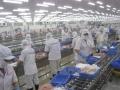 Nhiều doanh nghiệp thủy sản đang lãng phí năng lượng