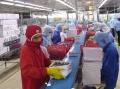 Trung Quốc: Giá tôm dự kiến tăng