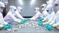 Doanh nghiệp Việt vào Top nhà sản xuất thuỷ sản lớn nhất thế giới
