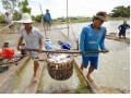 Chiếc giày Nike và con cá tra Việt Nam