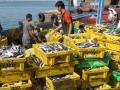 Phú Yên: Cần có chính sách phù hợp để phát triển đa nghề