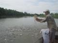 Xuất khẩu cá tra sang Trung Quốc tăng mạnh nhưng nhiều rủi ro
