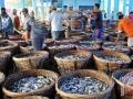 Indonesia: Biến đổi khí hậu làm giảm nguồn hải sản