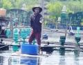 Thừa Thiên Huế: Tôm cá chết do nắng nóng