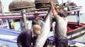 Tham gia chuỗi liên kết cá ngừ khắc phục