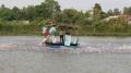 Tham gia chuỗi liên kết cá tra, bỗng biến thành… con nợ