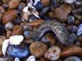 Loài sinh vật kỳ lạ ở đáy đại dương