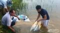 'Chuyên canh' cá trên ruộng lúa mang lại thu nhập cao