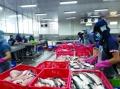 Cổ phiếu ngành thủy sản liệu có còn hấp dẫn?