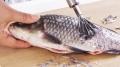 Vảy cá: Bảo bối trường thọ nhưng bị vứt bỏ lãng phí