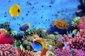 Báo động tình trạng suy giảm san hô tại Biển Đông