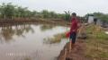 Cử nhân về quê nuôi cá kiếm 1 tỷ/năm