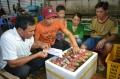 Cà Mau: Sôi động thị trường cua Năm Căn
