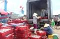 Xây dựng các cụm chế biến hải sản tập trung tại Nghệ An