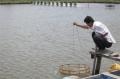 Huyện Đầm Dơi (Cà Mau): Có hơn 2.900 ha nuôi tôm công nghiệp
