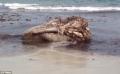 """Lo sợ khi đầu """"quái vật"""" cá voi khổng lồ dạt bờ biển"""