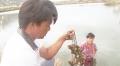 Ninh Hải: Nhiều diện tích nuôi hàu có dấu hiệu dịch bệnh