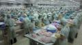 Doanh nghiệp cá tra Việt lại bị ép
