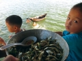 Cá biển ngược dòng Nhật Lệ lên ngàn
