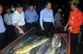 Đà Nẵng: Giảm lượng tàu đánh bắt gần bờ