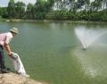 Gây màu nước cho ao nuôi tôm và những lưu ý