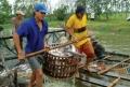 Giá cá tra và tôm khởi sắc có lợi cho người nuôi