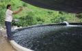 Giá trị sản xuất cá nước lạnh ở Lào Cai giảm mạnh