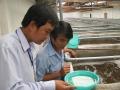 Công ty kinh doanh giống thủy sản Huy Thắng có nhiều sai phạm