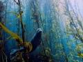 Cảnh tượng đẹp dưới lòng biển sâu