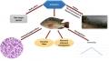 Những mặt trái của việc sử dụng hormon sản xuất cá đơn tính