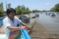 Cà Mau: Hàu nuôi chết, dân thiệt hại tiền tỷ