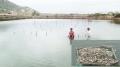 Hàu nuôi chết ở Ninh Hải do môi trường