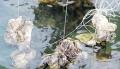 Thủy sản chết hàng loạt do nuôi ngoài quy hoạch ở Quảng Ngãi