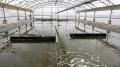 Kinh tế thủy sản là thế mạnh của tỉnh Bến Tre