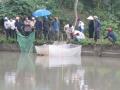 Bắc Kạn: Hội thảo mô hình nuôi cá rô phi đơn tính tại xã Yến Dương