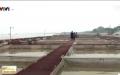 Hợp tác xã nuôi cá lồng giá trị kinh tế cao tại Bắc Ninh