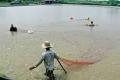 Trích Hướng dẫn khung lịch thời vụ nuôi trồng thủy sản Cà Mau năm 2014