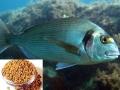Cỏ ca ri trong thức ăn thủy sản