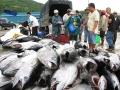 Sản lượng đánh bắt sụt giảm khi vào cuối vụ cá Nam