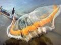 Sản lượng đánh bắt cá suy giảm đe dọa sức khỏe con người