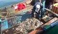 Bắt tại trận tàu khai thác tận diệt nguồn lợi thủy sản