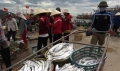Ngư dân thu tiền tỷ từ cá hố