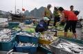 Tình hình khai thác nuôi trồng thủy sản 6 tháng đầu năm 2017