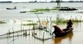 Miền Tây: Mưu sinh mùa nước lũ