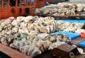 50 triệu đồng/con sò tai tượng, người dân lén khai thác