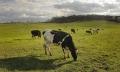 Dư lượng kháng sinh trong chất thải gia súc làm mất cân bằng hệ sinh thái đất
